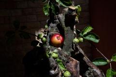 Thema Apfel